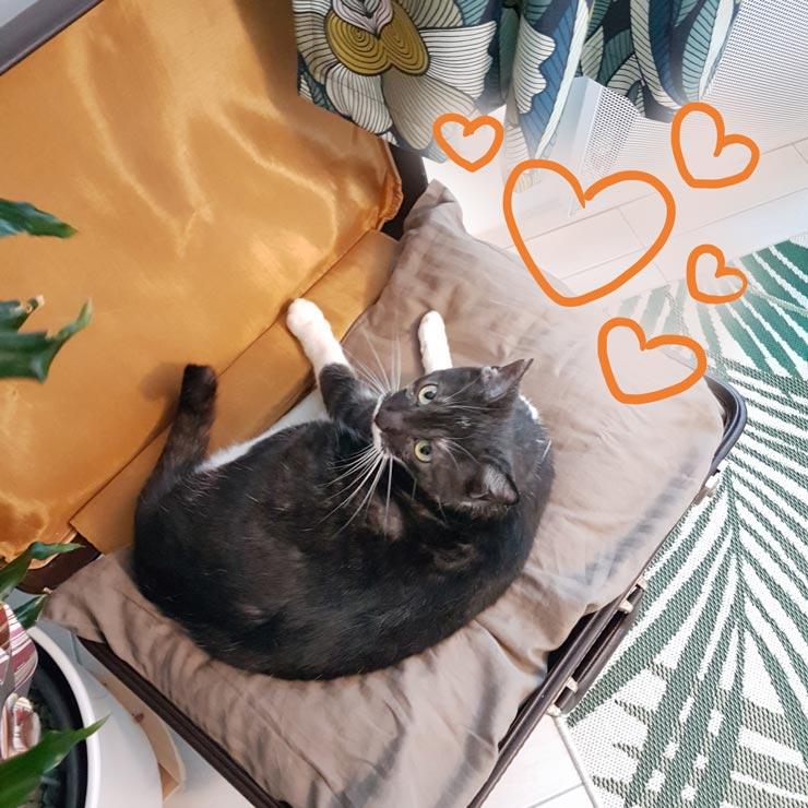 valise vintage transformée en pouf tabouret pour chat